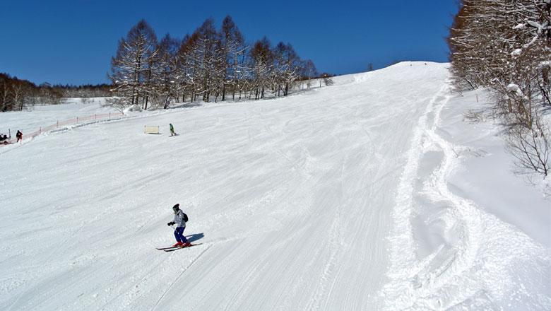 妙高杉ノ原スキー場のゲレンデ